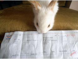 Yavru Tavşan İçin De Bilet Kesildi