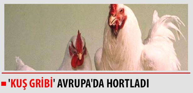 Kuş Gribi Avrupada Hortladı